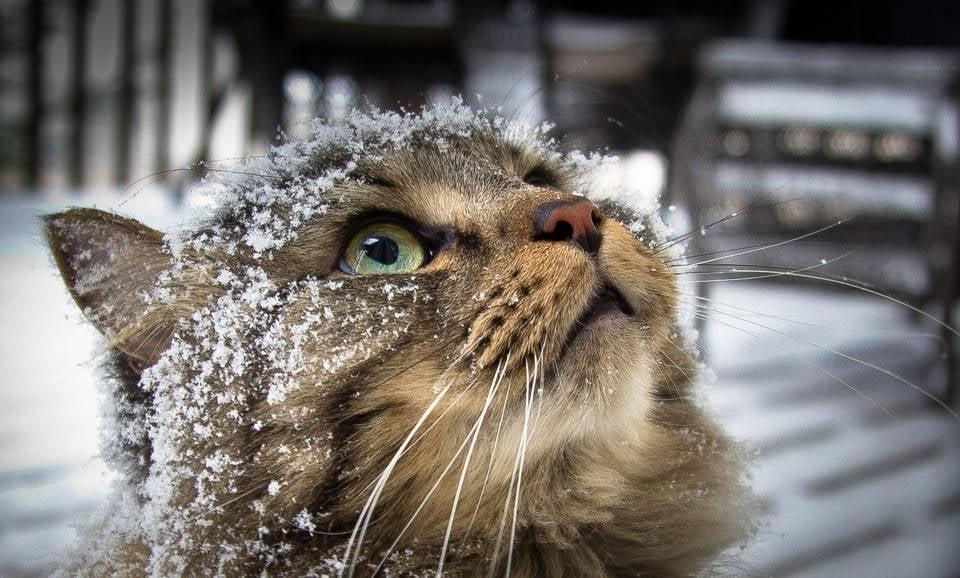 macskakert milyen nehéz